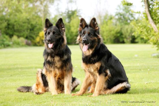 5209-42 HEETEN honden 7 mei 2017