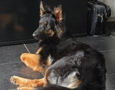 Pup zwart Evy