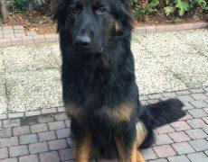 Pup bruin Jack