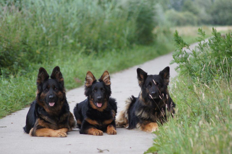 Indy , Kely , Alyssa
