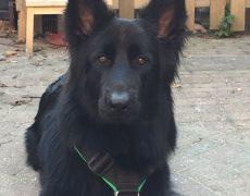 Pup donker groen; Roefke