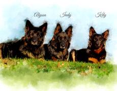 Alle honden